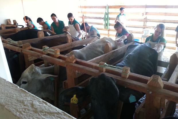 Alunos treinando para a ocupação Inseminação Artificial (Foto: Divulgação Instituto Federal do Sul de Minas)