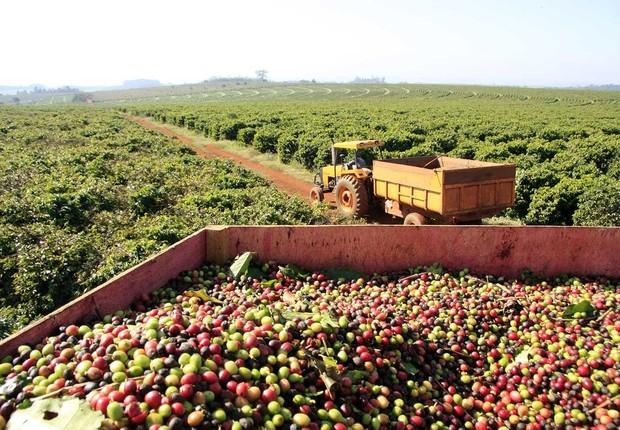 Produção de café em fazenda de Minas Gerais : produto para exportação ; PIB do Brasil ; agricultura ; agronégocio ;  (Foto: Divulgação)