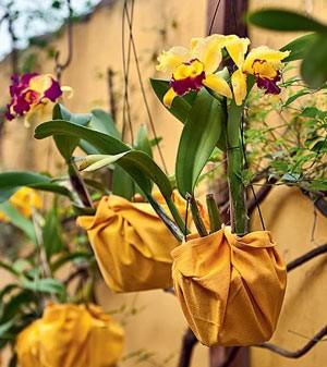 casa com orquídea (Foto: Casa e Jardim)