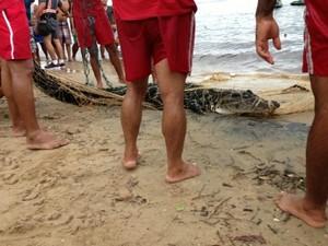 Jacaré capturado pelo Corpo de Bombeiros em Manaus (Foto: Divulgação)