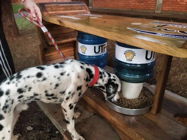 Local com ração, água e acesso a internet também atrai animais e seus donos (Foto: AlimentaCão / Divulgação)