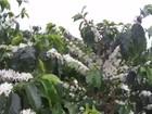 Volume de café exportado pelo Brasil recua 10% em outubro