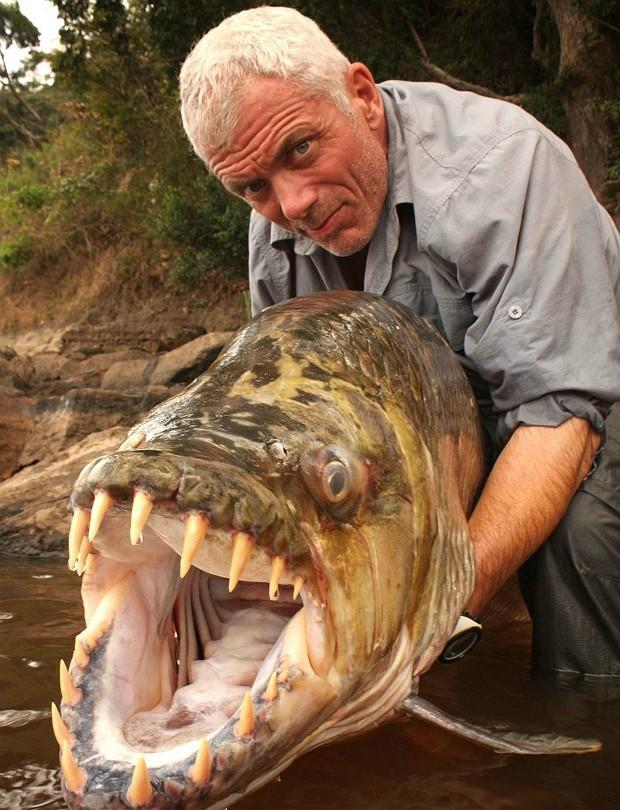 Jeremy Wade segura exemplar de peixe-tigre-golias, que foi capturado no Congo, o 2º maior da África.  (Foto: Caters)