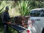 Polícia Ambiental multa homem em R$ 5 mil por manter aves em cativeiro