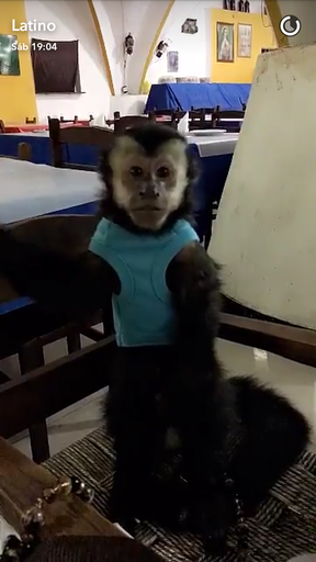 Twelves, macaco de Latino (Foto: Reprodução/Snapchat)