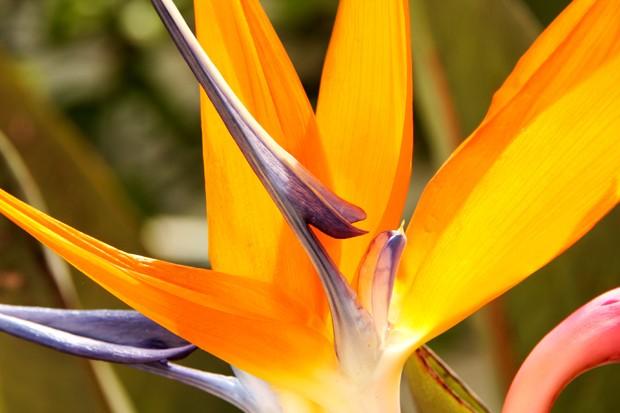 5 flores tropicais para ter em casa já (Foto: Getty Images/Hemera)