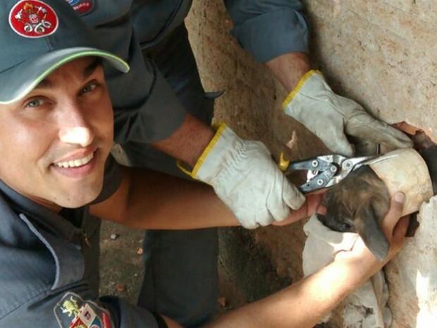Cano ficou preso no pescoço do animal (Foto: Divulgação/Corpo de Bombeiros)