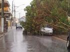 Chuva derruba árvores sobre dois carros em Paraguaçu, MG