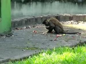 Animais recebem dieta especial no verão (Foto: Reprodução/TV Rio Sul)