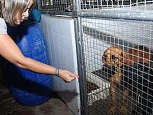 Cachorro em canil da Zoonoses do Distrito Federal (Foto: Brito/Agência Brasília)
