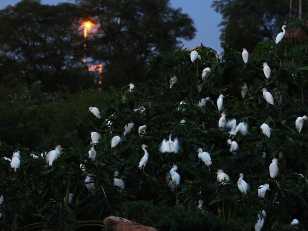 Aves em passeio noturno no Zoológico de Brasília (Foto: Andre Borges/GDF/Divulgação)