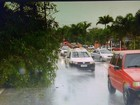 Árvore cai em Búzios, RJ, e deixa trecho de avenida em meia pista