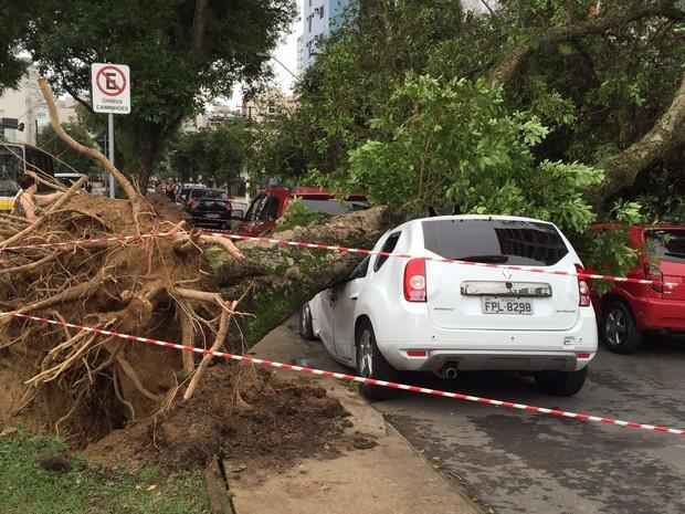 Árvore caiu em cima de carro na Avenida dos Bancários e veículo ficou destruído (Foto: Rosana Valle / G1)