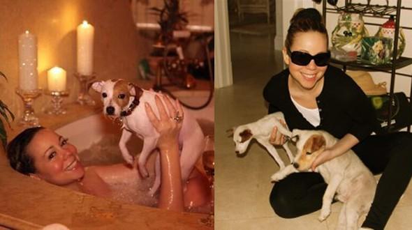 A cantora Mariah Carey tem quarto cães da raça Jack Russell: Jack