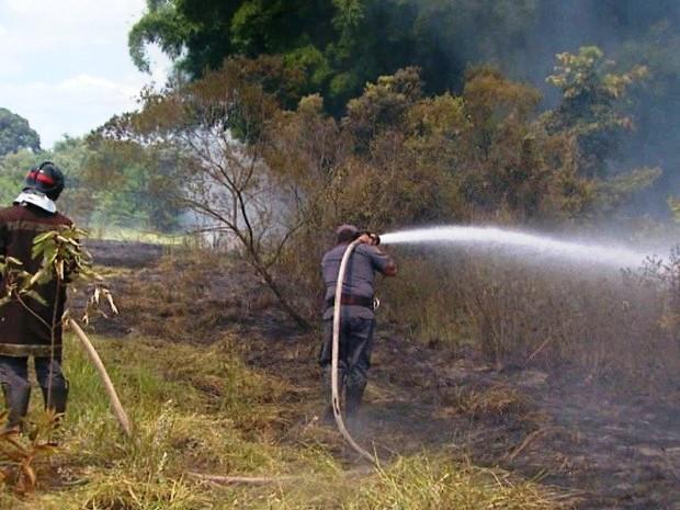Boa Esperança do Sul lidera queimadas no Estado de São Paulo (Foto: Rodrigo Sargaço / EPTV)