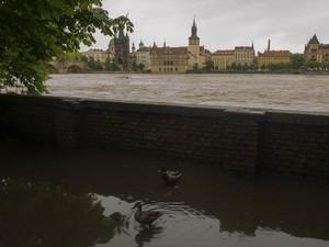Rio Vltava transbordou na capital Praga (Foto: Michal Cizek/AFP)