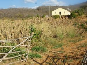 Sertanejos sofrem com os efeitos da seca no interior do RN (Foto: Anderson Barbosa/G1)