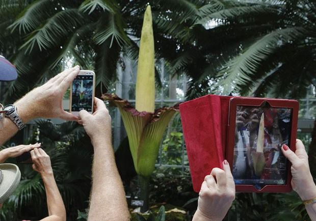 Planta Arum Titan floresce apenas três ou quatro vezes ao longo de seus 40 anos de vida (Foto: Larry Downing/Reuters)