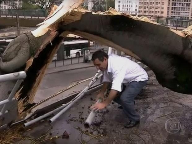 Árvore caiu sobre passarela do Terminal Bandeira  (Foto: TV Globo/Reprodução)
