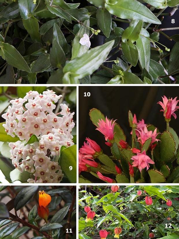 flores para jardim vertical na sombraPlantas as top 50 – Casa e