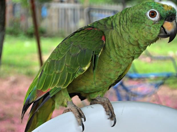 Dona diz que ave não voa porque tem uma asa menor que a outra (Foto: Aline Nascimento/G1)