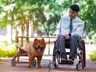 Em busca de lar para cão deficiente, grupo do DF faz ensaio fotográfico