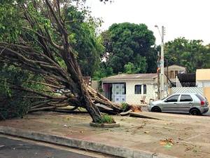Ventania arrancou árvore em praça localizada no Bairro Aleixo, Zona Centro-Sul de Manaus (Foto: Muniz Neto/G1 AM)