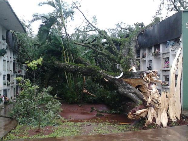 Árvore caiu no Cemtério São João Batista, em Foz do Iguaçu (Foto: Edilson Novaes)