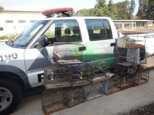 Policiais Ambientais resgatam 15 pássaros em Barbosa  (Foto: Divulgação / Polícia Ambiental )