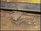 Menina atingida por trem em Guarantã segue internada em Marília