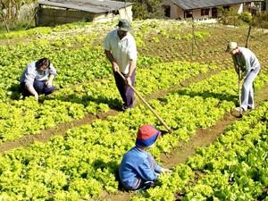 Há vagas para trabalhador rural nas agências do Sine do ES (Foto: Assessoria de Comunicação / Incaper)
