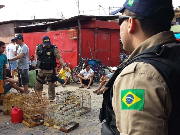 Operação foi realizada pela PRF e Ibama (Foto: Divulgação/PRF)