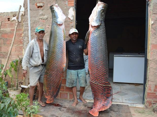 Peixes foram fisgados no Rio Parnaíba, na cidade de Uruçuí (Foto: Ana Paula Chaves/Vc no G1)