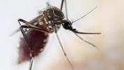 Por que o Brasil não consegue acabar com o Aedes aegypti? (Prefeitura de Ji-Paraná/Divulgação)