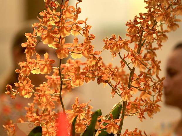 Festa das Flores vai até domingo (22) em Joinville (Foto: Divulgação)