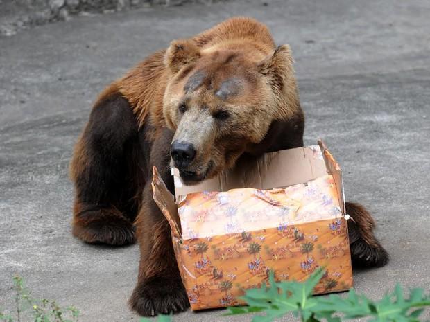 Ursos também ganharam presente de Natal (Foto: Alexandre Durão / G1)