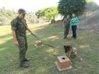 Cães da Marinha são treinados para reforçar segurança na Olimpíada