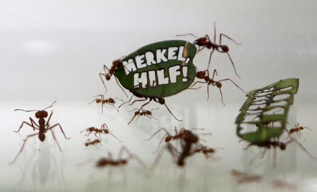 'Merkel, ajude': formigas carregam folhas com mensagens pró-Amazônia  (Foto: Reuters/Ina Fassbender)