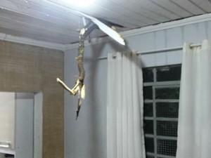 Galho danificou teto de casa na Vila Perreli, em Poá (Foto: Gilcimar Vieira)