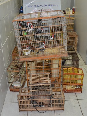 Sudema apreendeu 64 aves e um tatu (Foto: Walter Paparazzo/G1)