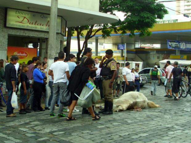 Morte de cavalo chocou turistas que estavam no local (Foto: Rogério Brasil / Opopular.net)