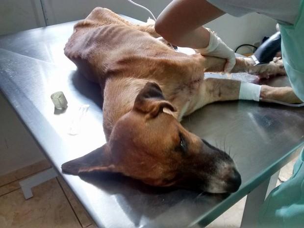 Cachorro precisou amputar a pata após ser atropelado em Porto Nacional (Foto: Reprodução/ Facebook)