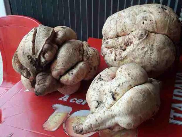 Aposentada mostra batata-doce 'gigante' junto com moradores do bairro (Foto: Rauston Naves/Vanguarda Repórter)