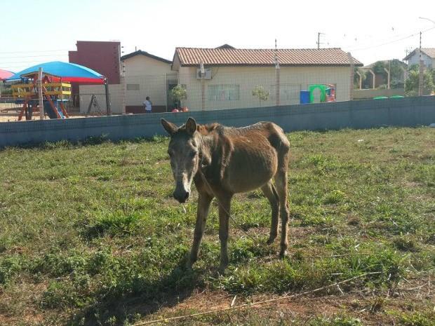Três cavalos foram encontrados amarrados em campo de futebol (Foto: Polícia Civil de Rondonópolis-MT)