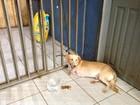 Cão de 3 patas é levado para Central após dono ser preso pela PRF em RO