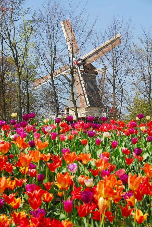... no meio das flores no parque Keunkenhof (Foto: Divulgau00e7u00e3o/Keukenhof