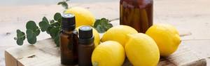Deixe sua casa mais cheirosa com um limoeiro (Reprodução/Pinterest)