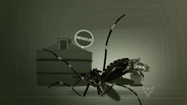 Dengue - TV Tribuna (Foto: Reprodução/TV Tribuna)