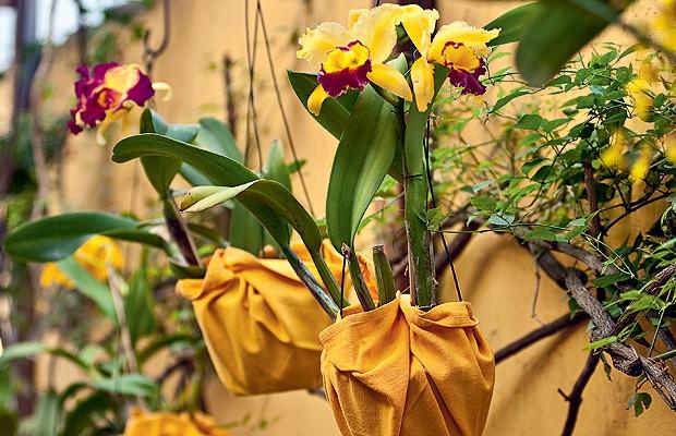 Orquídeas (Foto: Orquídeas)