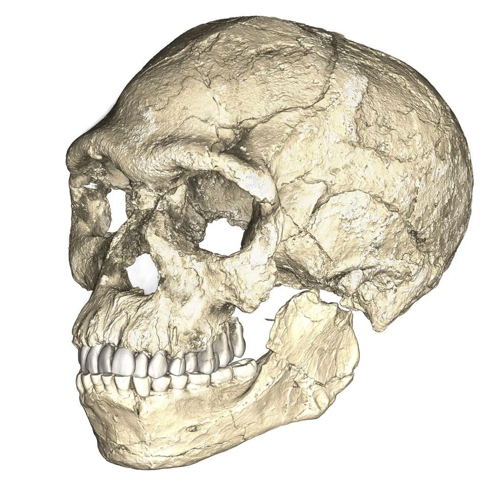 Reconstrução de crânio de Homo sapiens feita a partir de fósseis originais encontrado no Marrocos  (Foto: Philipp Gunz, MPI EVA Leipzig/divulgação)